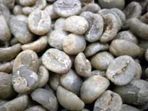 コーヒー生豆ケニアカリル